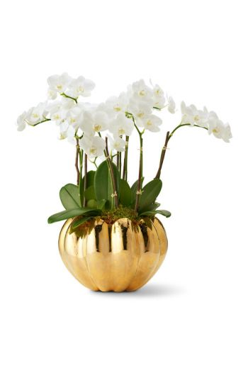 "AERIN Mirabelle Cream Cachepot 10.8"" x 10.8"" x 7.4"" - Available Colors: Cream and Gold"